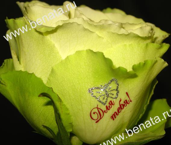 Купить наклейки на цветы в уфе масло из семян розы купить