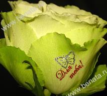http://www.benata.ru/images/flowers_img/6g.jpg