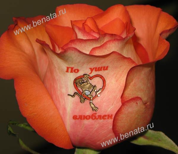 Наклейки на цветы купить минск идеи подарок на 14 февраля